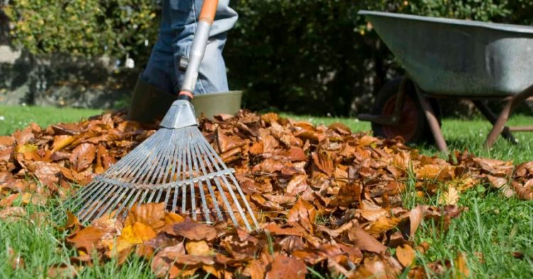 Tools Needed For a Proper Leaf Cleanup