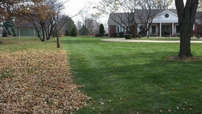Why You Need Fall Cleanup For Your Yard