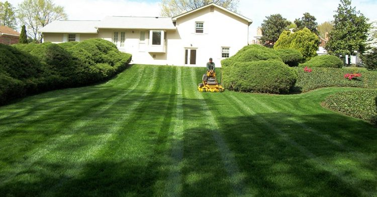 Tips on Choosing Your Lawn Care Company