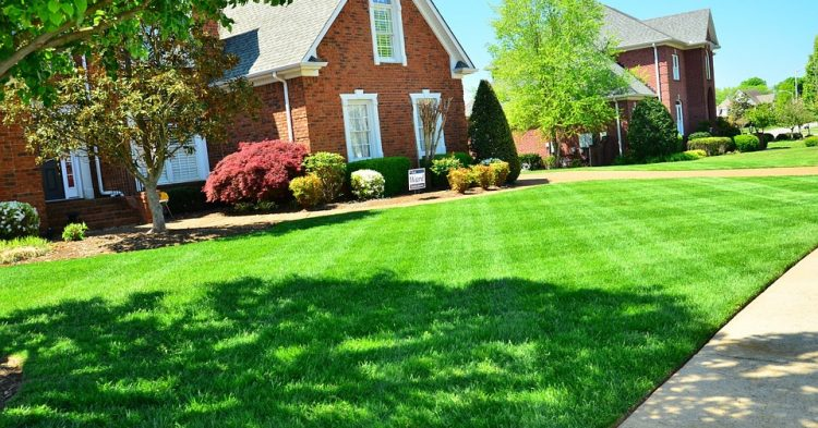 Importance of Having a Healthy Lawn