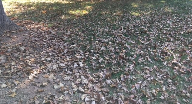 Cleanup Your Lawn Before The Winter Season